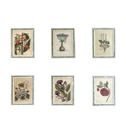 Six (6) 18th C. Hand Colored Botanical Engravings