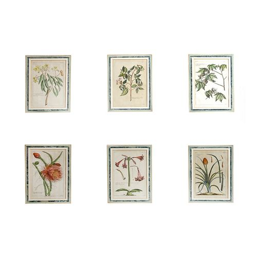 Six (6) Antique Hand Colored Botanical Engravings