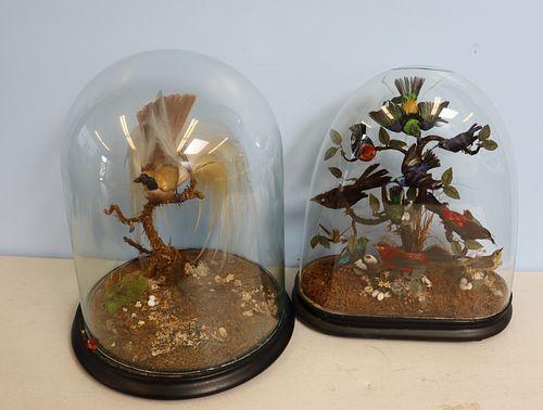 2 Victorian Bird Taxidermy Displays In Dome Glass