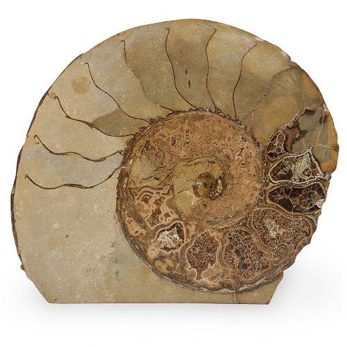 Fossilized Ammonite Specimen