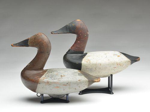 Rigmate pair of canvasbacks, Charles Barnard, Havre de Grace, Maryland, last quarter 19th century.