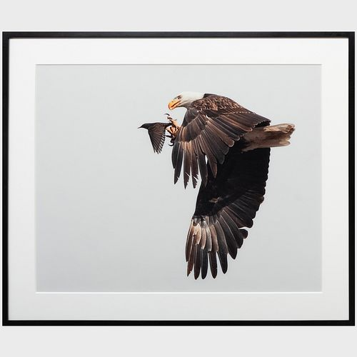 Rob Palmer: Eagle and the Starling III: A Pair