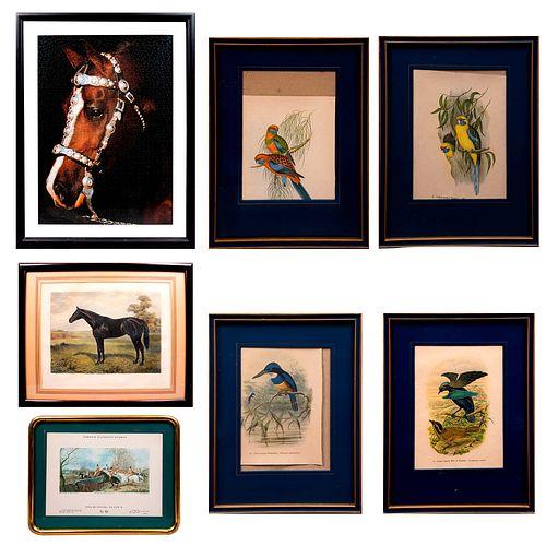 Lote de 7 cuadros decorativos. Consta de: a) Yellow-bellied Parakeet. Impresión. 21 x 16 cm. Otros.