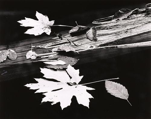 RICHARD GARROD - Leaves and Log, Oregon, 1976
