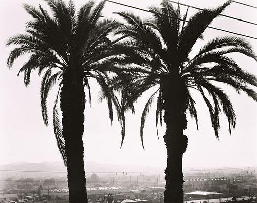 RYAN MCINTOSH - Twin Palms, Elysian Park, LA, CA, 2019