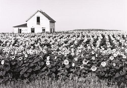 HENRY GILPIN - Sunflowers, North Dakota, 1981