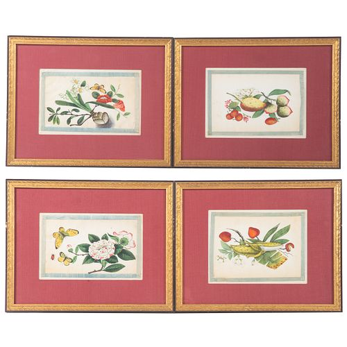 Set of Four Chinese Export Botanical Gouaches