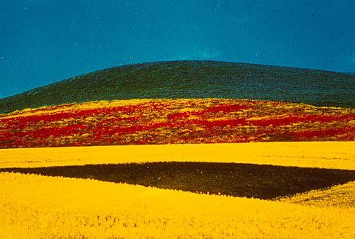 Franco Fontana (1933)  - Paesaggio, 1995