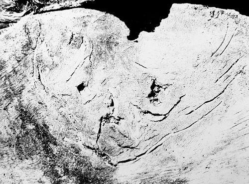 """Mario Giacomelli (1925-2000)  - Ritratto del Poeta. """"FIGURA"""" motivo suggerito dal taglio dell'albero, 1968"""
