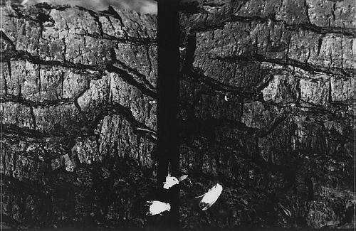 Luigi Erba (1949)  - Panorama per insetti #4 (Omaggio a Bartolini), 1995-2007