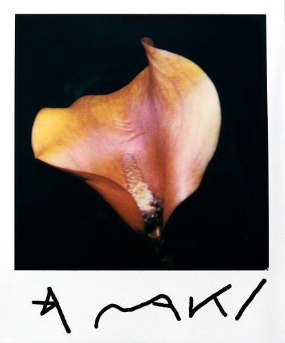 Nobuyoshi Araki (1940)  - Orange Kala, years 2000
