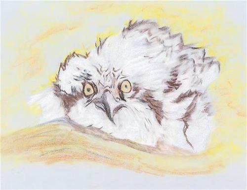 * Chema Cobo, (American, b. 1952), Owl