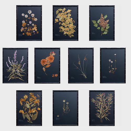 William Stuart Thornton (b. 1946): Ten Pressed Botanicals