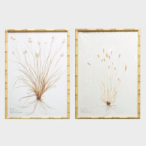 William Stuart Thornton (b. 1946):  Sixteen Pressed Botanicals