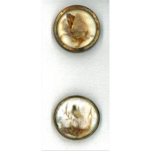 Two Mica Background Under Glass 18Th Century Buttons