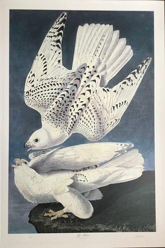 The Gyr Falcon, After Audubon, Bernard Loates