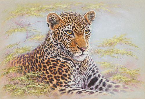 Kim Brooks Leopard, 1974