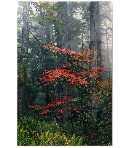 Large Peter Lik 'Splash of Red' Color Photograph