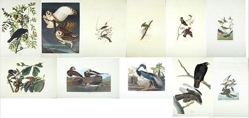 "John James Audubon (1785-1851), Group of Eleven Prints, consisting of ""Barn Owl,"" No. 35, Plate 171, Amsterdam ed.; ""American Crow,""..."