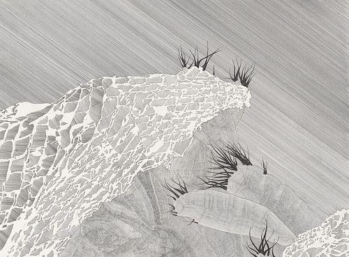 LIZA LYNCH, MFA 13 - Cactus I