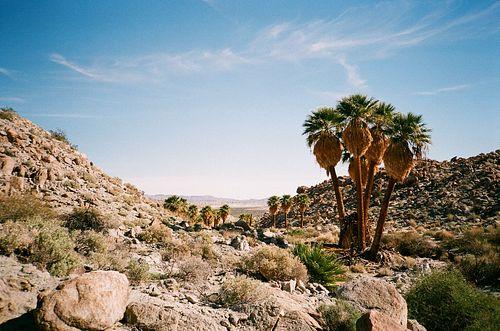 BRADLEY TSALYUK, BFA 13 - Palm Oasis
