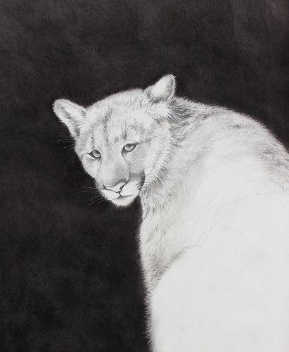 AMY ROSS, Diploma 00 - Cat Spirit