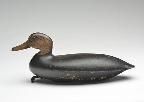 Black duck, John Blair Sr., Philadelphia, Pennsylvania, last quarter 19th century.