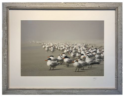 JULIE TREMBLAY, Post Bac 00 - Royal Terns