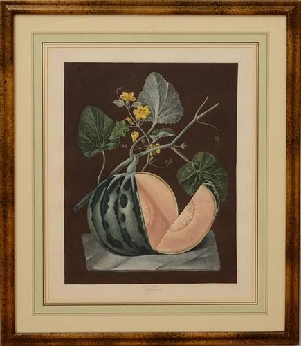 George Brookshaw framed melon aquatint engraving
