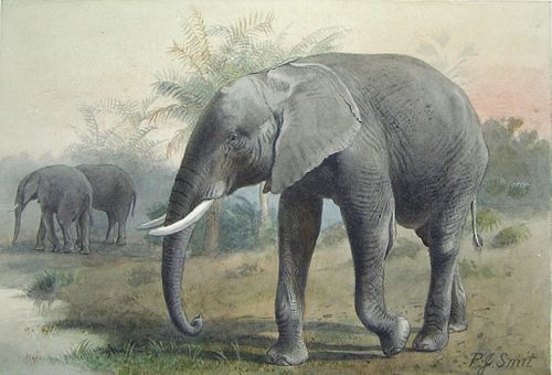 Pierre Jacques Smit (Dutch, 1863-1960) - Loxodonta Africana (African Elephant)