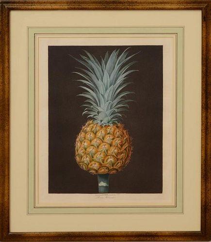 George Brookshaw framed pineapple aquatint engraving