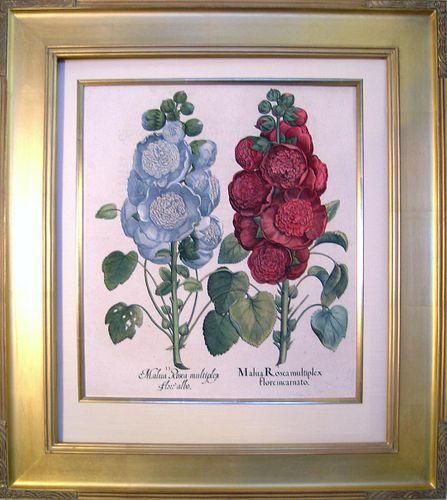 """Malva"" ( Hollyhock)  Framed Copper Plate Engraving"