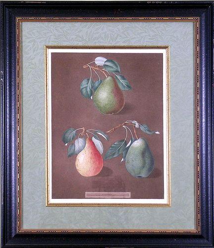 """Pears.  Plate LXXXII.""  Framed Aquatint"