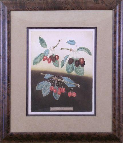 """Cherries.  Plate IX.""  Framed Aquatint"