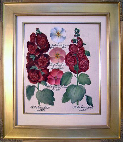 "Malva Hortensis Flore (""Hollyhock"")  Framed Copper Plate Engraving"