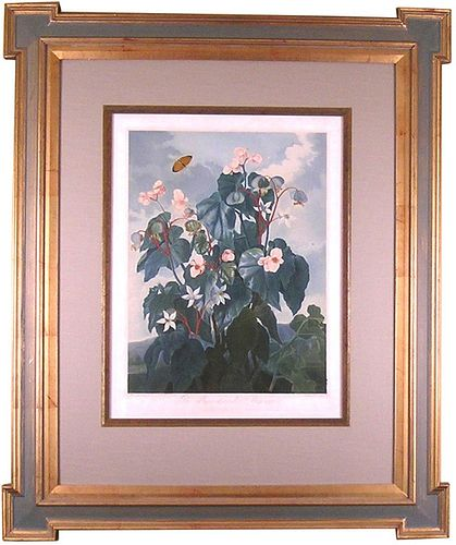 """""""The Oblique-Begonia.""""  -Framed"""