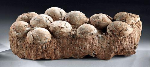 Therizinosaurus Egg Clutch, 70 to 120 Million Years Old