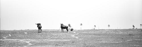 Juan Martinez: Botswana Makadikadi Basin