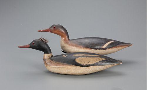 Swimming Red-Breasted Merganser Pair, Daniel Lake Leeds (1852-1922)