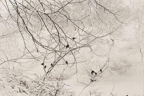 "Esther Bubley ""Birds in Snow Central Park"" Photograph"