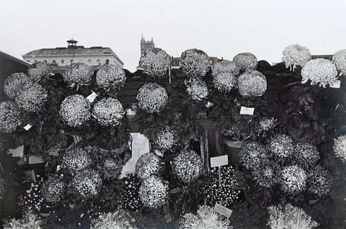 Lee Friedlander(American, b. 1934)Photographs of Flowers, 1974
