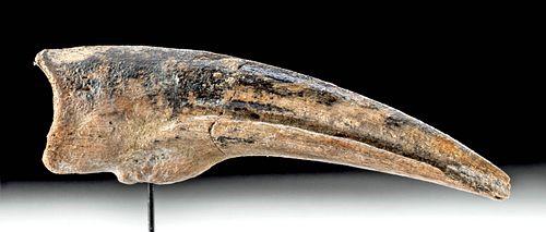 Rare Cretaceous Ornithomimus Dinosaur Claw