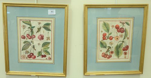 Six Botanical Fruit Engravings, each hand-colored, two by Poiteau and Gabriel; pair by Abrey Le Melon and La Citrouille; along with a pair by Sellier
