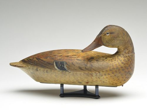 Rare and important back preening mallard hen, Robert Elliston, Bureau, Illinois, circa 1900.