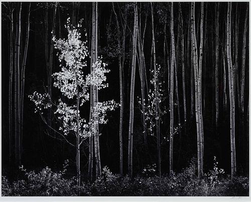 Ansel Adams(American, 1902-1984)Aspens, Northern New Mexico, 1958