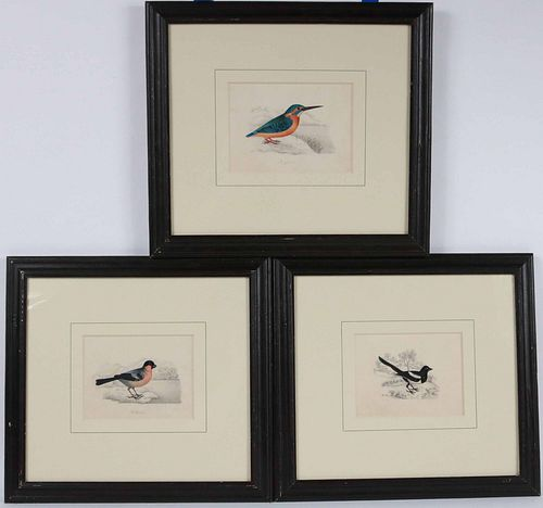 Three Watercolor and Pencil Studies of Birds