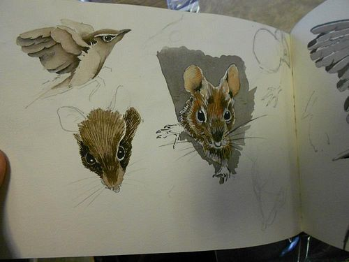A collection of wildlife drawings and sketches, circa 1950s-60s, in three sketchbooks and loose, som