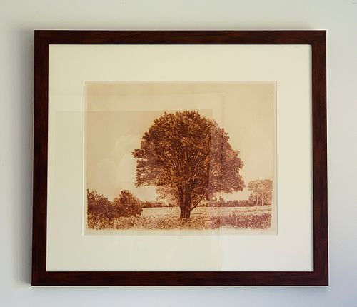 Herbert Fink, Classical Maple, Etching on Paper, 1979