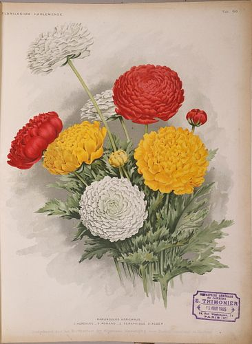 BOUND COLLECTION OF (37) CHROMOLITHOGRAPHS OF DUTCH BULB BLOSSOMS