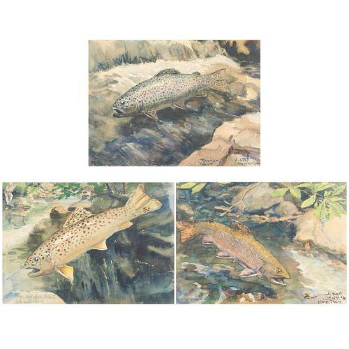 Grp: 3 Albert Levering Fish Watercolors